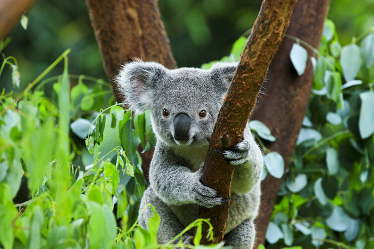 Calibre helps deliver sustainable energy at Lone Pine Koala Sanctuary | Calibre Group