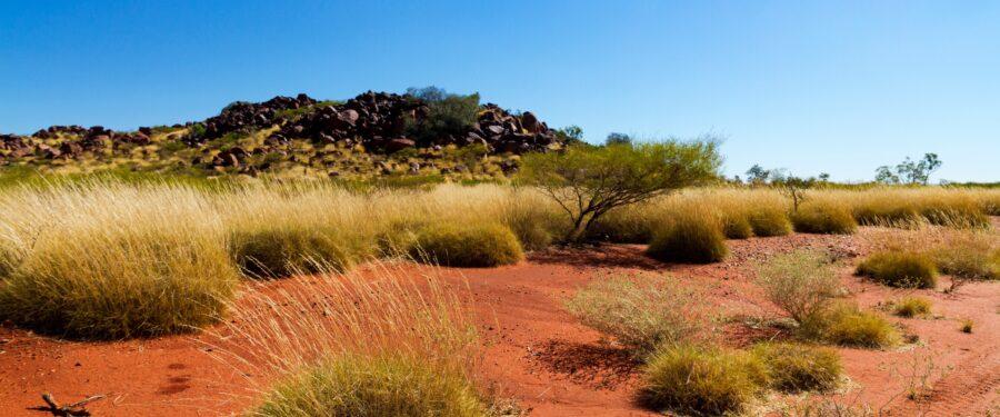 Pilbara WA spinifex